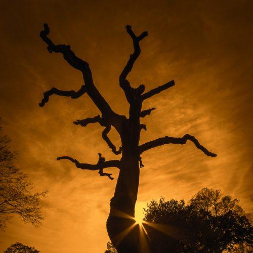 stativkunst-Spiel-mit-der-Sonne-Fotos-017